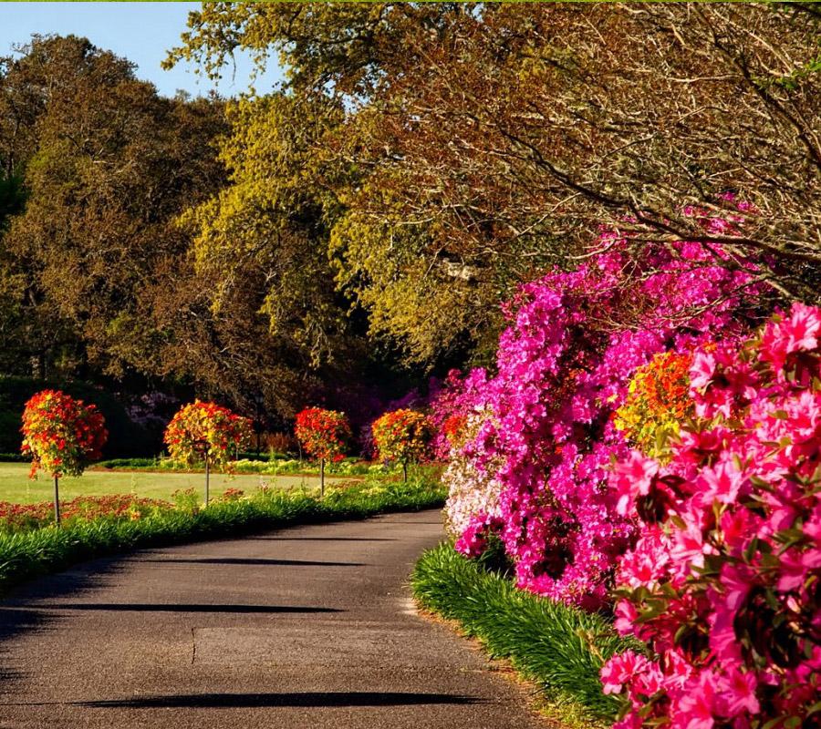 entretien jardin saint brieuc